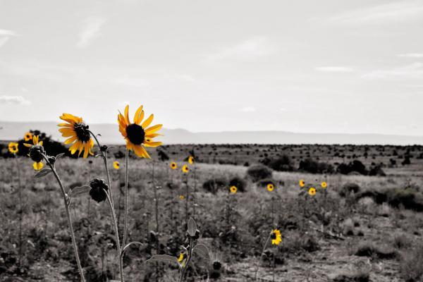 Blumen an der Route 66